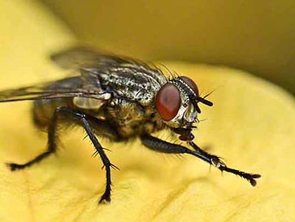 Mơ thấy con ruồi đánh tất tay cặp số nào ăn chắc?