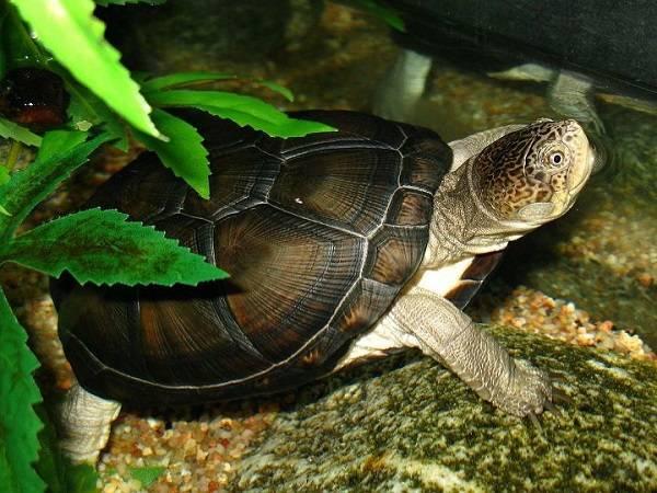 Nằm mơ thấy rùa đánh xổ số con gì dễ trúng nhất