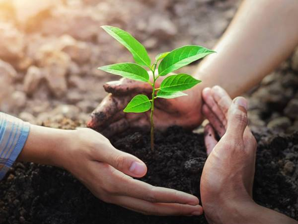 Nằm mơ thấy trồng cây